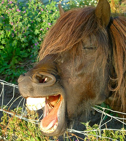 a horse with its teeth exposed